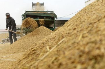 联合国粮农组织8月谷物价格指数环比上涨4%