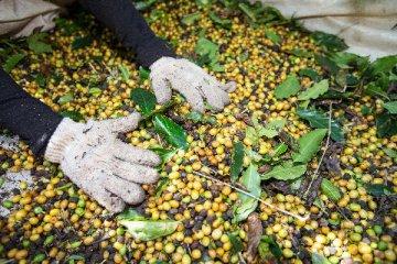 亞洲咖啡協會主席:亞洲咖啡行業迎來史無前例發展機會