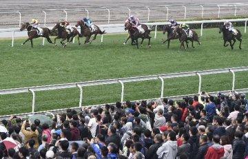 海南省否认重启赛马规划研制工作