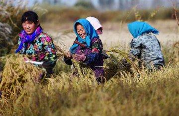 聯合國糧農組織:世界食品價格指數11月下跌 預計今年稻米產量或創新高