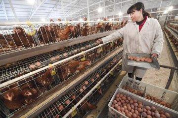 欧盟将增加对我国禽肉进口配额