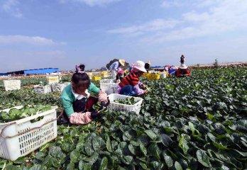 六部委發佈開展土地經營權入股發展農業產業化經營試點指導意見