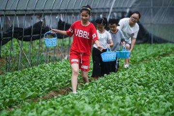 菜价季节性缓涨 春节供应有保障