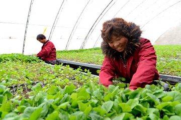 今年中央一号文件聚焦农业农村优先发展