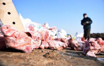 中國非洲豬瘟疫情總體可控--權威專家解讀非洲豬瘟防控有關情況
