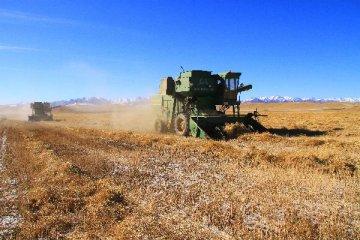 外交部:中方暫停進口加拿大企業油菜籽屬正常檢疫安全防範
