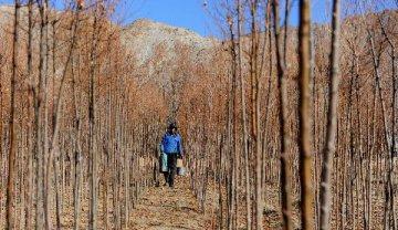 國家林業和草原局局長張建龍:中國人工林面積長期居世界首位
