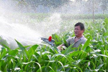 """吉林:玉米從""""按斤賣""""到""""論穗賣""""助農民增收"""