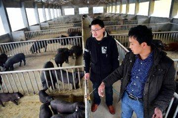 猪周期来了,但押宝猪肉股需谨慎