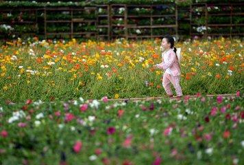 通讯:让更多自育花卉研究成果写在中国大地上