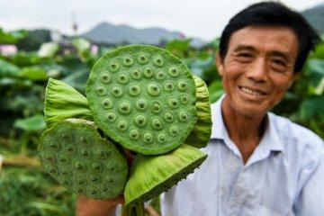 2018年中國農產品網路銷售額達3000億元