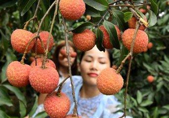 """【精选】荔枝贵到吃不起?""""水果自由""""你实现了吗?"""