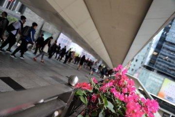 【專題】畢馬威:過半香港受訪者青睞粵港澳大灣區就業環境