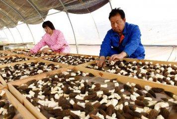 中國將加快解決家庭農場發展中人、地、錢等問題