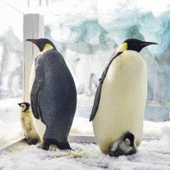 气候变暖可能会导致帝企鹅灭绝