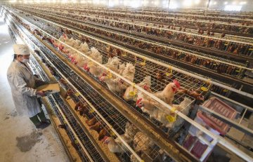兩部門公告:解除美國禽肉進口限制